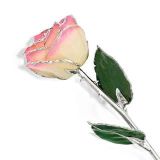 Lacquer Dipped Silver Trimmed White/ Pink Rose