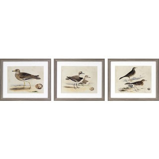 Decor Therapy 'Coastal Birds' Grey Oak Woodgrain-finish Framed Wall Art (Pack of 3)