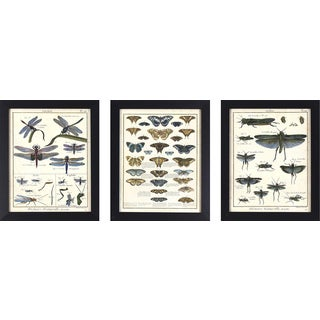 Decor Therapy Framed Butterfly and Insect Study Set (Pack of 3)