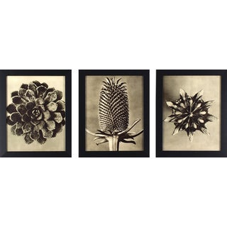 Decor Therapy 'Sepia Botany Study' Black-finish Frame Wall Art (Pack of 3)