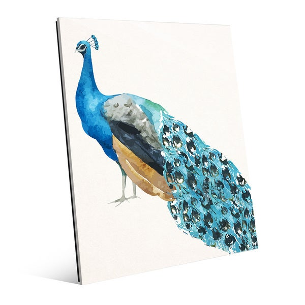 'Peacock on Paper' Glass Wall Art