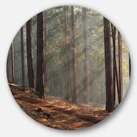 Designart 'Rays of Sun in Dense Forest' Landscape Photo Circle Wall Art