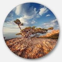 Designart 'Sunrise with Old Tree at Peak' Landscape Photo Round Metal Wall Art