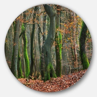 Designart 'Autumn Forest in the Netherlands' Landscape Photo Large Disc Metal Wall art