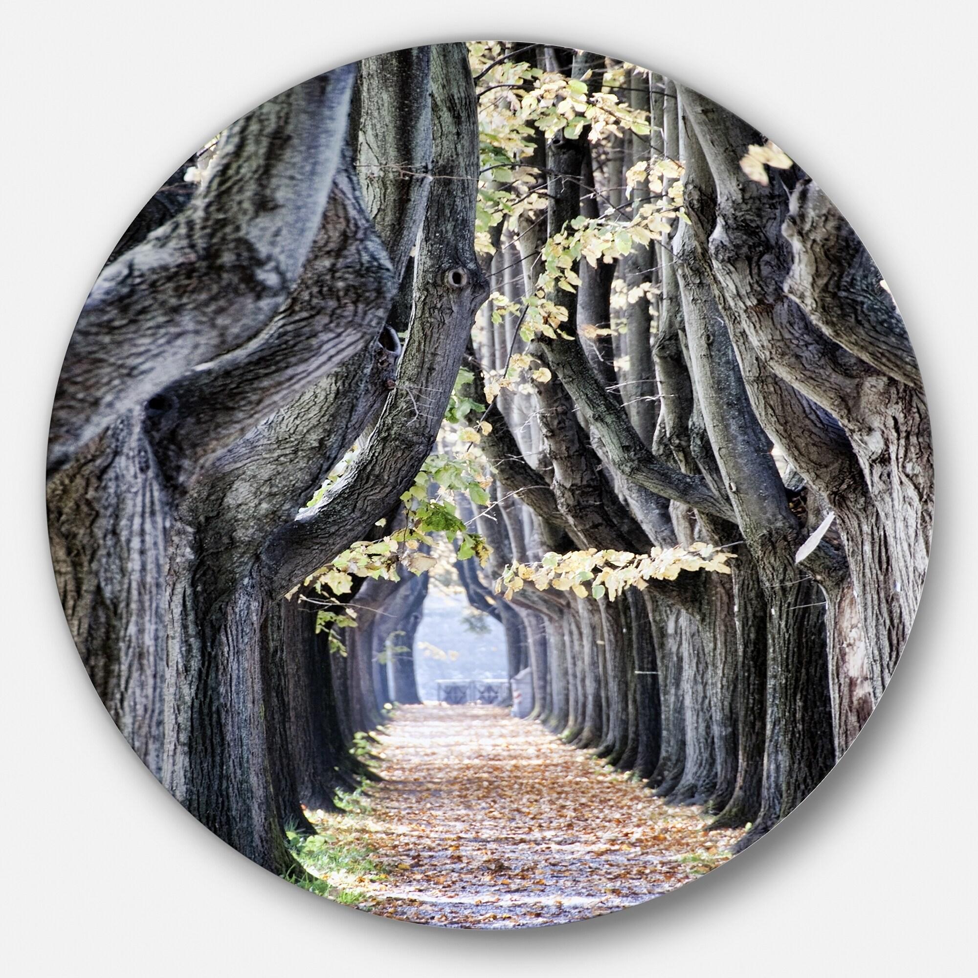 Designart Tree Outside Lucca Italy Landscape Photo Large Extra Large Ebay