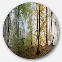 Designart 'Morning Forest Panoramic View' Landscape Photo Disc Metal Wall Art