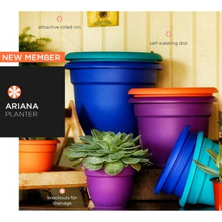 Bloem Ariana 8-inch Planter with Self Watering Grid