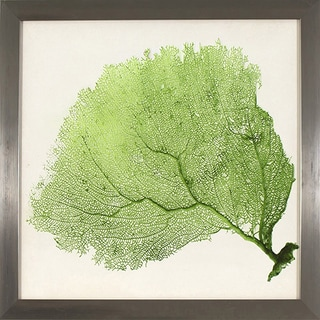 Green Sea Fan Study in Stainless Steel Finish Frame