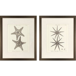 Set of 2 Striking Starfish in Golden Bronze Finish Frame