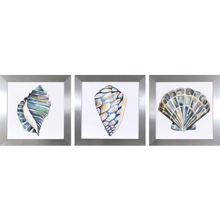 Set of 3 Aquarelle Shells in Chrome Finish Frame