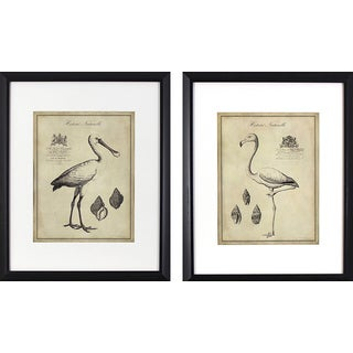 Set of 2 Antique Flamingoes in Black Finish Frame
