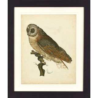 'Antique Owl' Dark Walnut Framed Wall Art