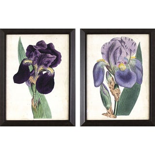 Set of 2 Purple Irises in Dark Woodgrain Finish Frame