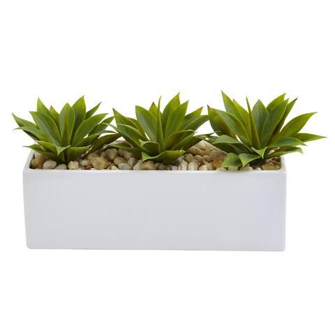 Agave Succulent in Rectangular Planter