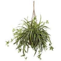 Spider Plant Hanging Basket