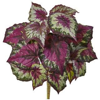Wax Begonia Bush (Pack of 6)