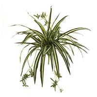 Silk 23-inch Spider Plant Bush (Pack of 4)