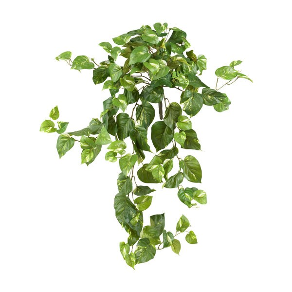 40-inch Pothos Hanging Bush (Pack of 3) - Multi