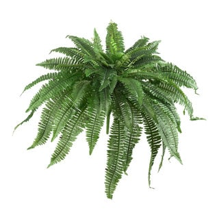 Link to 48-inch Boston Fern (Set of 2) - Green Similar Items in Decorative Accessories