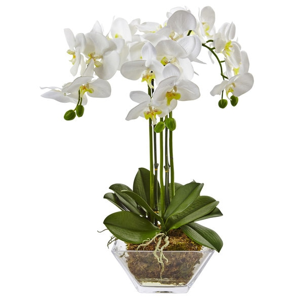 Shop Nearly Natural Triple Phalaenopsis Orchid In Glass Vase Free