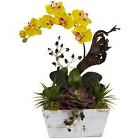 Yellow Orchid and Succulent Garden with White-wash Planter