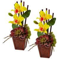Cattleya Orchid and Succulent Arrangement (Set of 2) (Yellow)