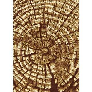 Tripoli Collection Brown Bark Polypropylene Turkish Area Rug (5'3 x 7'0)