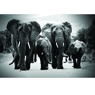 Elephants II Printed on Tempered Glass