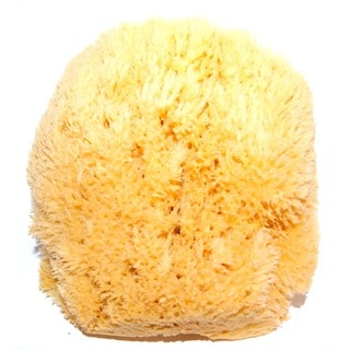 Natural and Pure Body Cleansing Sea Sponge