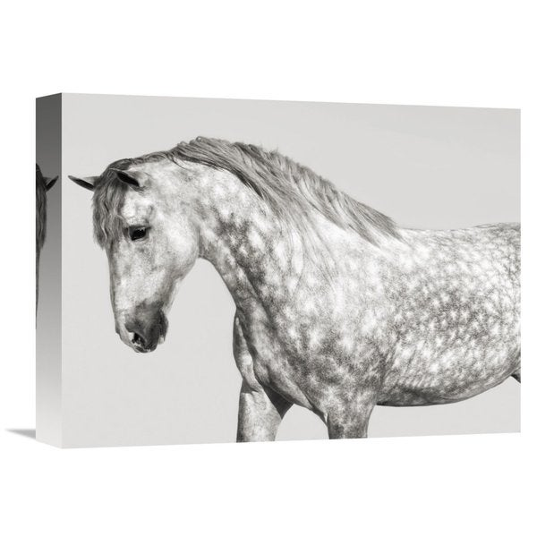 Global Gallery Pangea Images 'Leia, Andalusian Pony' Stretched Canvas Artwork