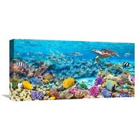 Global Gallery 'Sea Turtle and Fish, Maldivian Coral Reef' Stretched Canvas Artwork