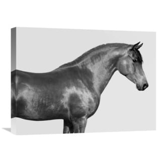 Global Gallery Pangea Images 'Orpheus, Arab Horse' Stretched Canvas Artwork