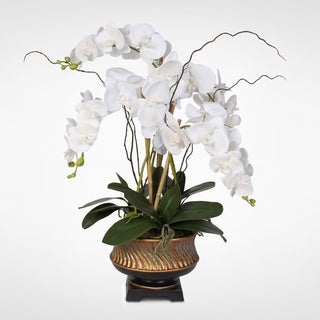 "Parisan Chic White Beauty Orchid Nestled in ""Gilded Vase"