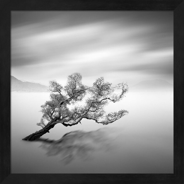 Moises Levy \'Water Tree VI\' Framed Art - Free Shipping Today ...