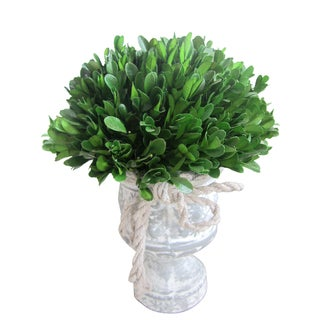 12-inch Preserved Holly and Boxwood Topiary