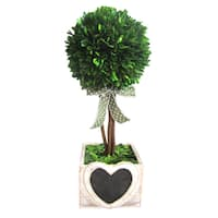 16-inch Preserved Boxwood Pot with Heart Wood Box