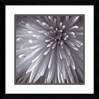 Framed Art Print 'Natural Designs II (Floral)' by Assaf Frank 17 x 17-inch