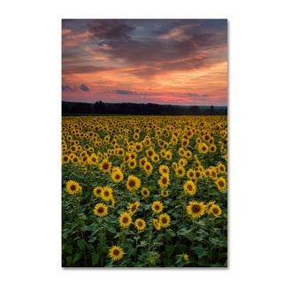 Michael Blanchette Photography 'Sunflowers' Canvas Art