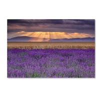 Michael Blanchette Photography 'Lavender Sunbeams' Canvas Art - Purple