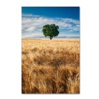 Michael Blanchette Photography 'Wheat Field Tree' Canvas Art - Black