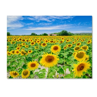 Michael Blanchette Photography 'Field of Yellow' Canvas Art