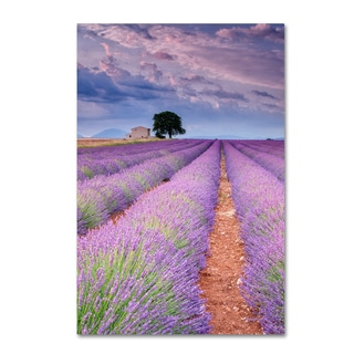 Michael Blanchette Photography 'Rows Of Lavender' Canvas Art