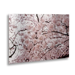 Ariane Moshayedi 'Cherry Blossoms' Floating Brushed Aluminum Art