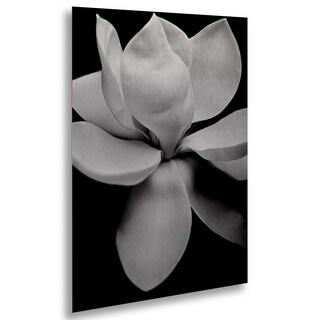 Michael Harrison 'Magnolia' Floating Brushed Aluminum Art