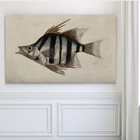 Vintage Fish Study II - Premium Gallery Wrapped Canvas