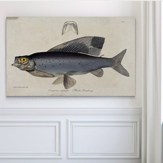 Vintage Fish Study I - Premium Gallery Wrapped Canvas