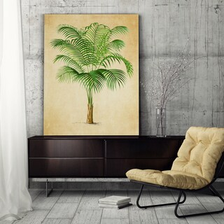Vintage Palmary ( Palm Tree ) Sketch I - Premium Gallery Wrapped Canvas