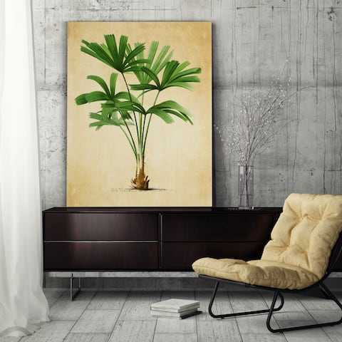 Vintage Palmary ( Palm Tree ) Sketch II - Premium Gallery Wrapped Canvas