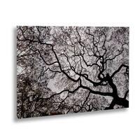 Kurt Shaffer 'Japanese Maple Abstract' Floating Brushed Aluminum Art - 16 x 22