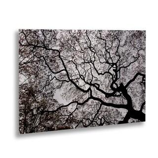 Kurt Shaffer 'Japanese Maple Abstract' Floating Brushed Aluminum Art